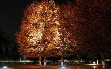 LED trädbelysning