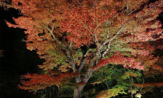 LED belysning av träd