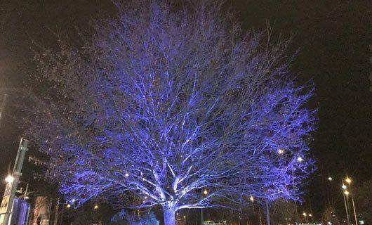 LED trädbelysning med blått ljus